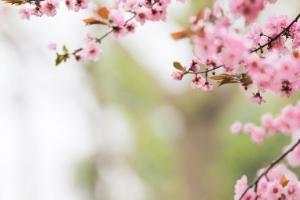 Bloemen & Planten houden van mensen. Dit zegt je tuin over jou